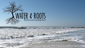 water-and-roots_-beach