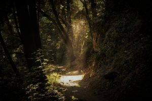 prayer image, light